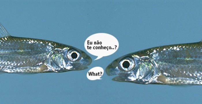 Tradução: Mais oportunidades 'portuguesas' no Reino Unido